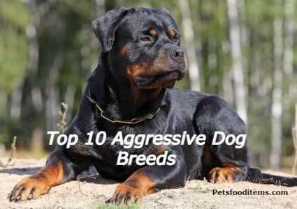 Top 10 Aggressive Dog Breeds